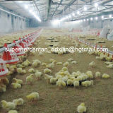 High Quality Automatic Equipment for Broiler Poultry House