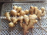 Wholy Dry Ginger at Competitive Price
