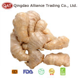 2017 Chinese Fresh Ginger with Top Quality