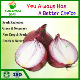Popular Fresh Red Onion 3-6cm 5-8cm 7-9cm with Top Quality From Shandong