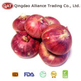 High Quality Chinese Red Fresh Onion
