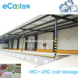Original Manufacturer Middle-Sized Cold Storage for Frozen Food