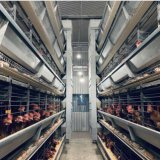 Best Price Poultry Farm Used Poultry Cage Battery Cages for Layers for Farms