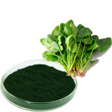 Dehydrated Spinach Powder Spinach Leaf Powder for Pigment