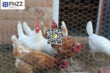 Fencing Pets Roultry Crops Rabbit Run Poultry Netting