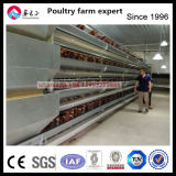 Layer Auto Feed System with Galvanized Cage