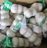 Prepacked Pure White Garlic at Competitive Price