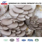 Cultivate High Yield King Oyster Mushroom Spawn Export
