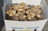 Air Dried Ginger New Corp Low Price