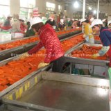 Factory Supplier Chinese New Crop Red Fresh Carrot