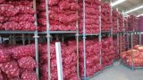 New Crop Exporting Shandong Onion