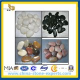Pebble Stone/Cobblestone for Landscape (YY-black/white/red/yellow pebbles)