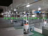 High Quality Stainless Steel Automatic Feeder for Pig Use