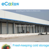 Fresh Keeping Cold Storage for Vegetable Fruits Logistics Distribution Center and Warehouse
