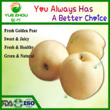 Juicy Pear Golden Fresh Pear with Reasonable Price From China