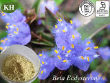 100% Natural Cyanotis Vaga Extract Beta-Ecdysone