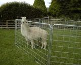 Hot Sale Galvanized Sheep Wire Mesh Portable Fence Panel/Corral Panel/Alpaca Panel (factory)