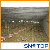 Poultry House Equipment for Hot Sale