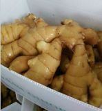 Ginger Powder, New Product Wholesale Natural Ginger From China for Sale