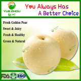 Fresh Golden Pear Class 1 Sweet Golden Pear Organic Pear with Price