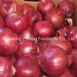 New Crop Fresh Chinese Onion