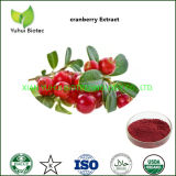 Dried Cranberry Fruit Extract Supplement