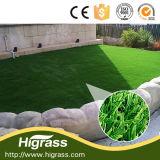 Average Price High End Ornamental Grass for Mini Garden
