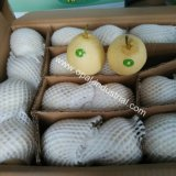New Crop  Ya  Pear  with Good Price for Exporting