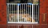 Hot Selling Assembled Plastic Pet Barrier