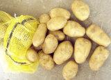 Superior Quality Potato and Reasonable Price