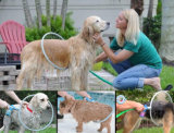 360 Degree Ring-Shaped Bath Shower Head Pet Cleaning Supplies Pet Dog Products Dog Cleaning Products 360 Dog Washer