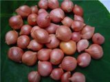 New Crop Fresh Onion From China