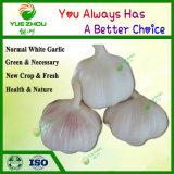 Wholesale Garlic China New Crop Garlic Normal White Garlic Price with Price