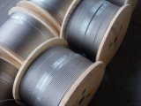 High Quality Stainless Steel Wire Rope &Cable at Competitive Prices