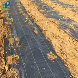 Black Plastic Woven Fabric/PP Woven Landscape Fabric/Weed Control Fabric