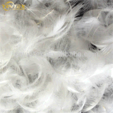 Wholesale Cheap Washed White Duck Feather Down Price