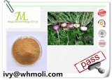 Natural Plant Extracts Maca Extract with Competitive Price