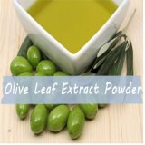Manufacturer Supply Purity Natural Plant Extract Wholesales Olive Leaf Extract Oleuropein