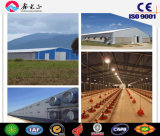 Steel Structure Poultry House/Steel Structure Chicken Farm with Equipments (CH-44)