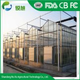 Big Transparent Glass Greenhouse Grow Tent