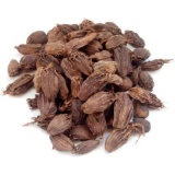 New Havest Dried Tsao-Ko Amomum Fruit in Good Price Fructus Tsaoko Caoguo