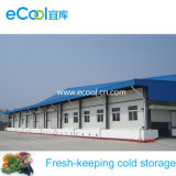 Freezer Cold Room/Cold Storage for Vegetables and Fruits