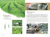 Wholesale 9501 Chinese Organic Tea Leaf Drink Tea