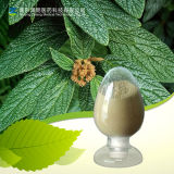 Pure Natural 98%HPLC Ursolic Acid Loquat Leaf Extract