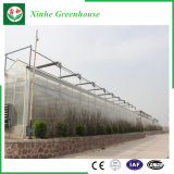 Hydroponic System with PC Sheet Greenhouse