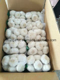Fresh Pure/Normal White Garlic