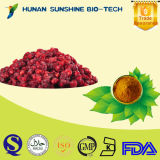Liver Herbal Remedy Schisandra Chinensis Extract 2%