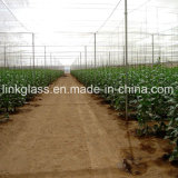 Agricultural Vegetable New PE Shade Net with UV (YHZ-SDN08)
