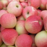 Fresh Red Gala Apple Export Quality