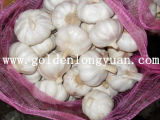 Fresh Garlic with Competitive Price From Factory